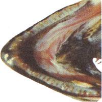 Close up photo of coho jaw